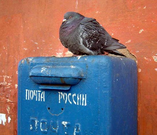 Фото приколы почта россии надписи